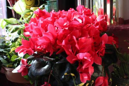 Valentine's Day Florists - Albert's of Brookline Florist
