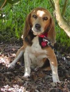 The Lehane's missing dog, Tessa