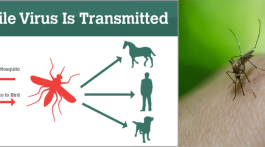 west nile virus header